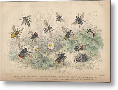 Bees Metal Print by Oliver Goldsmith