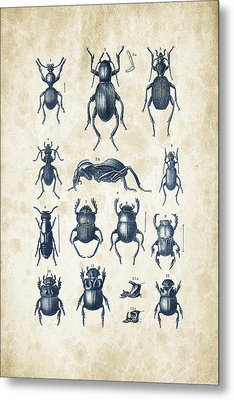 Beetles - 1897 - 01 Metal Print by Aged Pixel