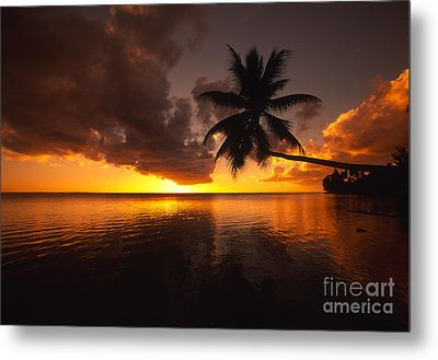 Bending Palm Metal Print by Ron Dahlquist - Printscapes