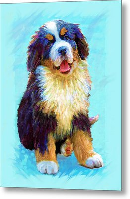 Bernese Mountain Dog Metal Print by Jane Schnetlage