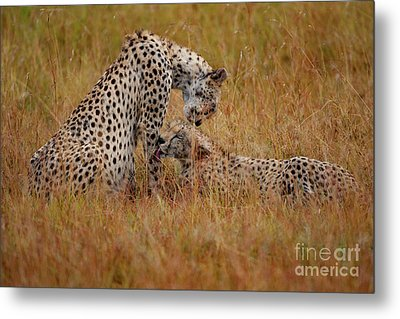 Best Of Friends Metal Print by Stephen Smith