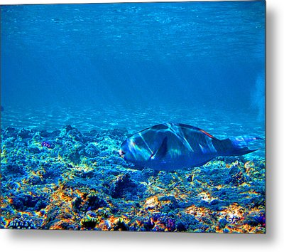 Big Fish. Underwater World. Metal Print by Andy Za
