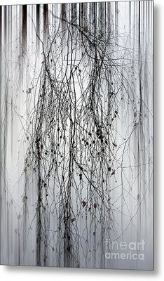 Birch Tree Metal Print by SK Pfphotography