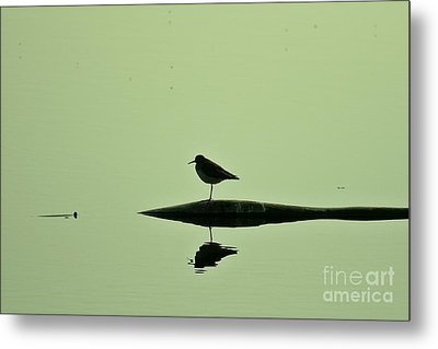 Bird In A Pond Metal Print by Mario Brenes Simon
