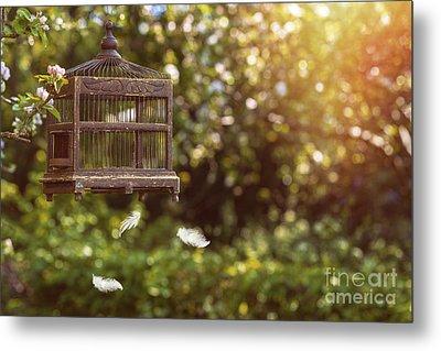 Birdcage In Spring Metal Print by Amanda Elwell