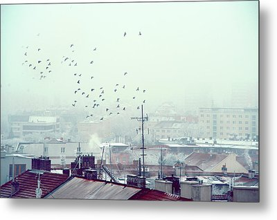 Birds Falling Down The Rooftops Metal Print by Jenny Rainbow