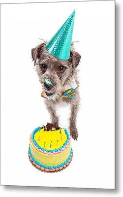 Birthday Dog Eating Cake Metal Print by Susan  Schmitz