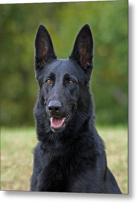 Black German Shepherd Dog Metal Print by Sandy Keeton