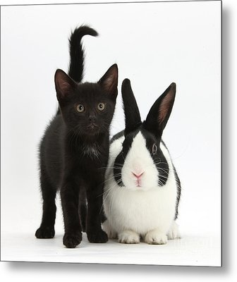 Black Kitten And Dutch Rabbit Metal Print by Mark Taylor