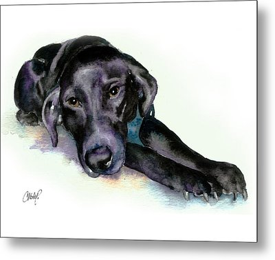 Black Lab Stretching Out Metal Print by Christy  Freeman