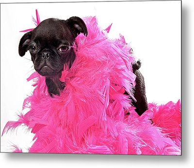 Black Pug Puppy With Pink Boa Metal Print by Susan Schmitz