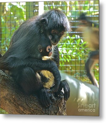 Black Spider Monkey And Baby Metal Print by AnnaJo Vahle