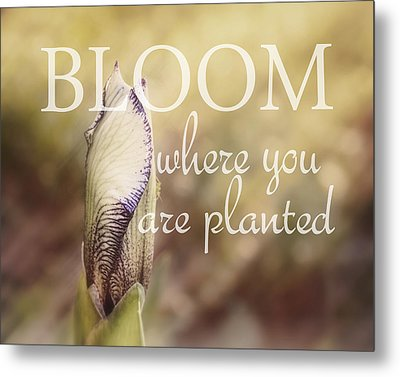 Bloom Where You Are Planted Metal Print by Ann Powell