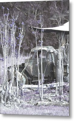 Blossoming With Age Metal Print by Holly Kempe