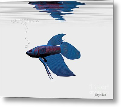 Blue Betta Metal Print by Corey Ford