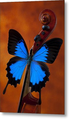 Blue Butterfly On Violin Metal Print by Garry Gay
