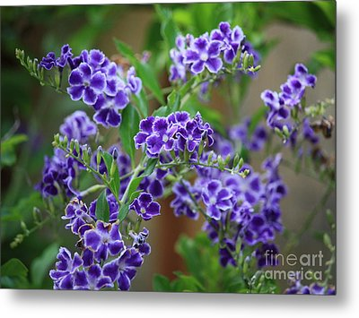 Blue Cottage Flowers Metal Print by Carol Groenen