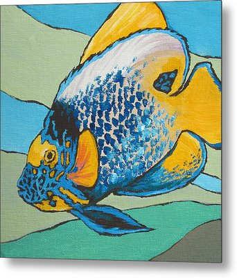 Blue Face Angelfish Metal Print by Sandy Tracey
