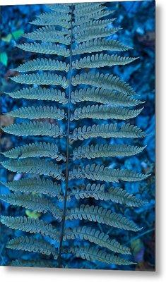 Blue Frond Metal Print by Douglas Barnett