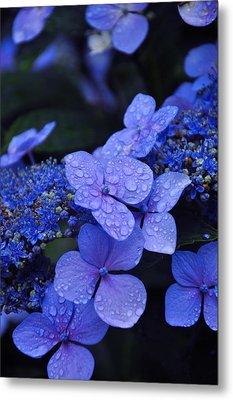Blue Hydrangea Metal Print by Noah Cole