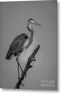 Blue In Black-bw Metal Print by Marvin Spates