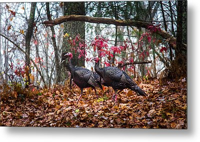 Blue Ridge Turkey Trot Metal Print by Karen Wiles