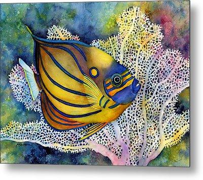 Blue Ring Angelfish Metal Print by Hailey E Herrera