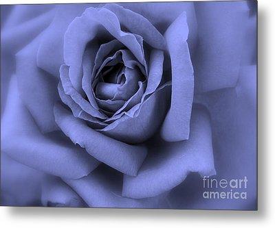 Blue Rose Abstract Metal Print by Carol Groenen