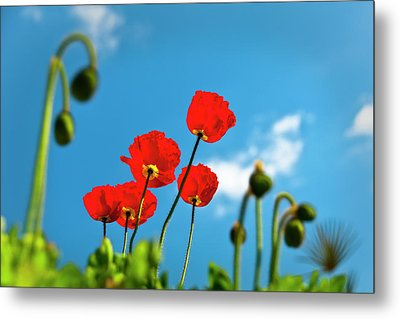 Blue Sky And Poppies Metal Print by Tamyra Ayles