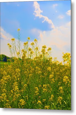 Blue Sky Yellow Flowers Metal Print by Bill Cannon