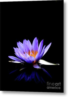 Blue Water Lily . 7d5714 Metal Print by Wingsdomain Art and Photography