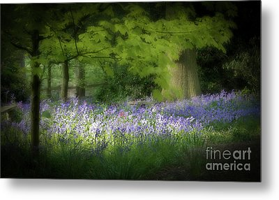 Bluebell Forest Metal Print by Amanda And Christopher Elwell