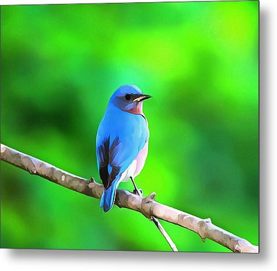 Bluebird On Summer Green Metal Print by Dan Sproul