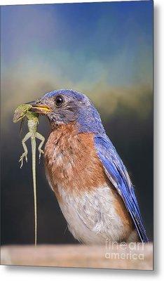 Bluebird With Lizard Metal Print by Bonnie Barry