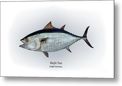 Bluefin Tuna Metal Print by Ralph Martens