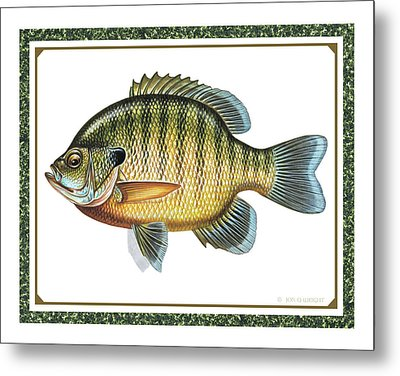 Bluegill Print Metal Print by JQ Licensing