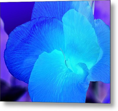 Blurple Flower Metal Print by James Granberry