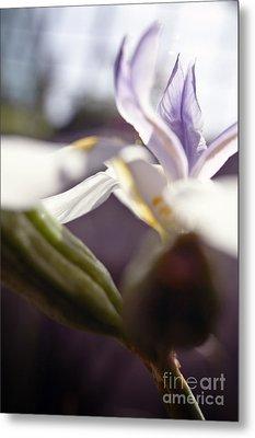 Blurred Iris Metal Print by Ray Laskowitz - Printscapes