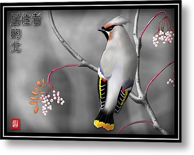 Bohemian Waxwing Metal Print by John Wills