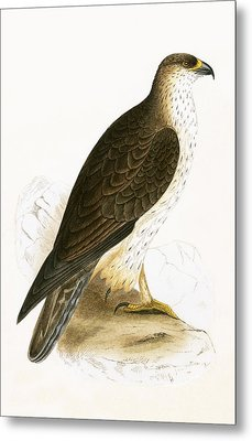 Bonelli's Eagle Metal Print by English School