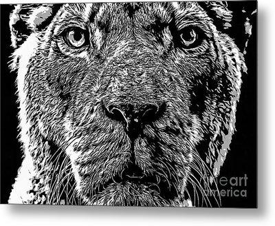 Born Free Lion Metal Print by Edward Fielding