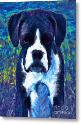 Boxer 20130126v5 Metal Print by Wingsdomain Art and Photography