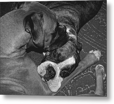 Boxer Buddies Metal Print by DigiArt Diaries by Vicky B Fuller
