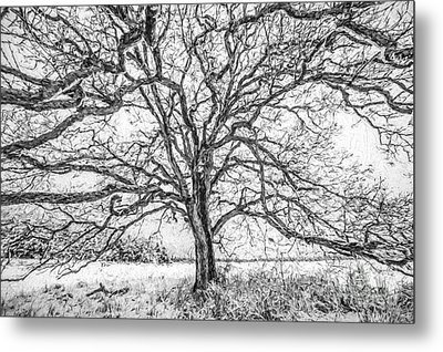 Branches Of Life Metal Print by David Letts