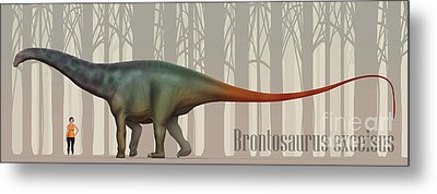 Brontosaurus Excelsus Size Compatison Metal Print by Christian Masnaghetti
