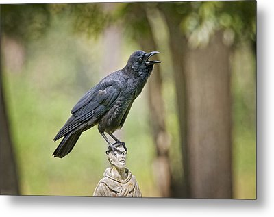 Brother Crow On St. Francis' Head Metal Print by Bonnie Barry