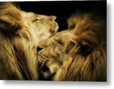 Brothers Metal Print by Animus  Photography