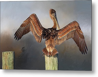 Brown Pelican - Strike A Pose Metal Print by HH Photography of Florida