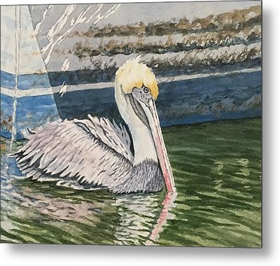 Brown Pelican Swimming Metal Print by Don Bosley