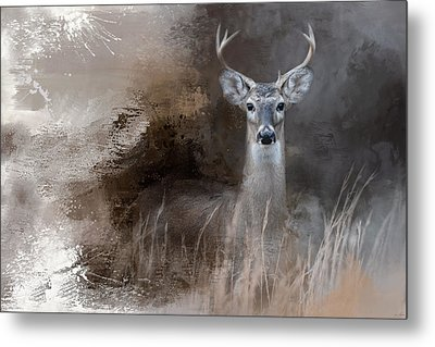 Buck In The Shadows Metal Print by Jai Johnson